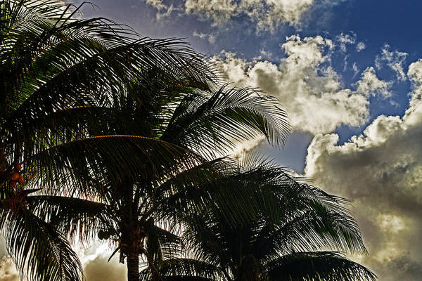 Photograph - The Palm Before The Storm by Bill Swartwout Photography