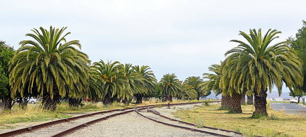 Photograph - The Palms By The Tracks by AJ  Schibig