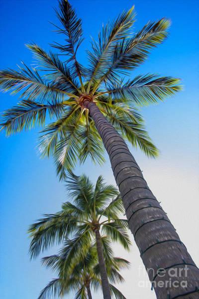 Wall Art - Photograph - The Palms by Jon Neidert