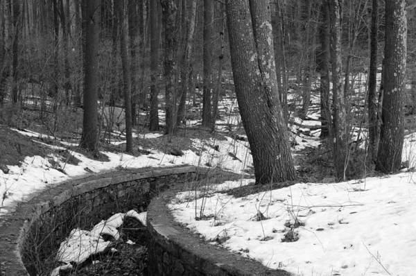 Photograph - The Parallel Path by Luke Moore