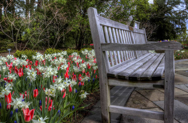 Photograph - The Park Bench by David Dufresne