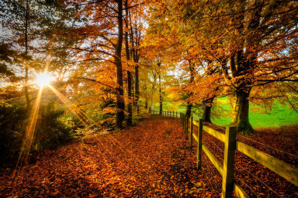 Somerset County Photograph - The Park In Autumn by Rene Ehrhardt