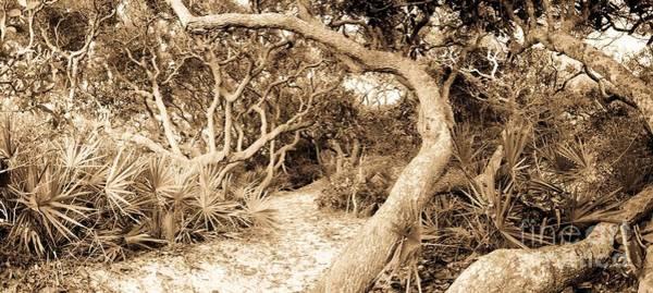 Grayton Beach State Park Photograph - The Path Awaits by John Harmon