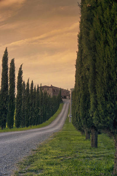 Driveway Photograph - The Path Home by Andrew Soundarajan