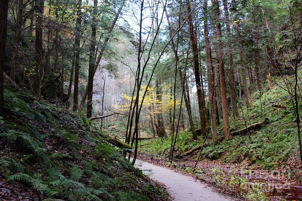 Photograph - The Path by Karen Adams