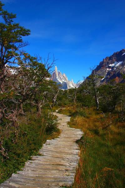 Herron Photograph - The Path To Mountains by FireFlux Studios