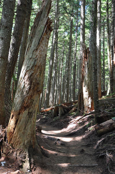 Photograph - The Path Well Trodden by Kirt Tisdale