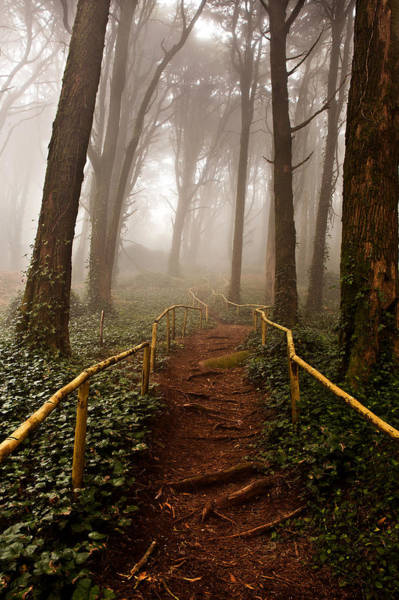 Sintra Photograph - The Pathway by Jorge Maia