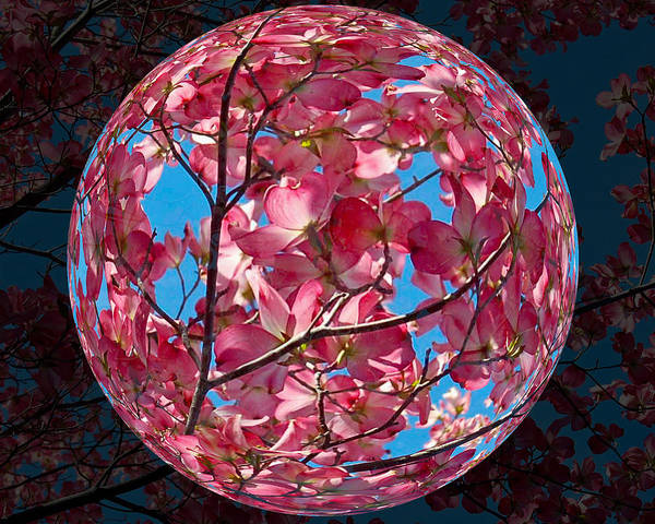 Photograph - The Peach Tree Sphere by William Havle