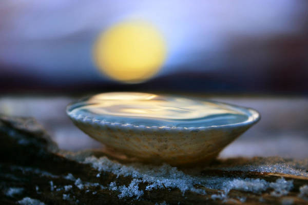 Something Different Photograph - The Pearl by Laura Fasulo