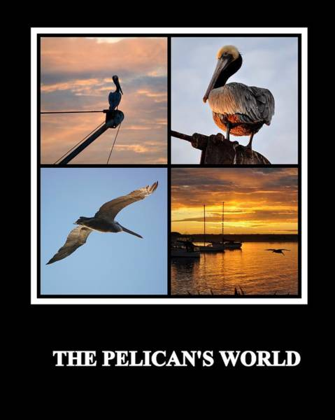 Photograph - The Pelican's World by AJ  Schibig