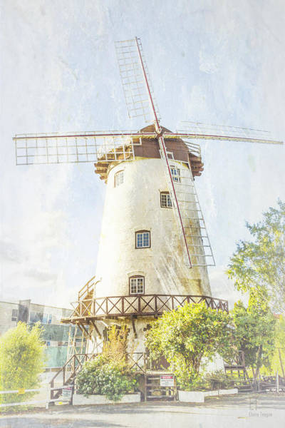 Photograph - The Penny Royal Windmill by Elaine Teague