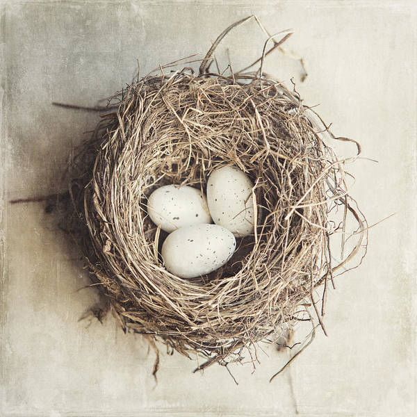 Birds Eggs Photograph - The Perfect Nest by Lisa Russo