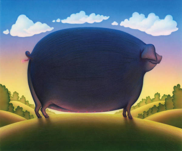 Andrew Farley Photograph - The Pig by MGL Meiklejohn Graphics Licensing