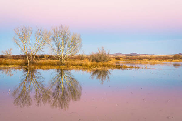 Wall Art - Photograph - The Pink Sky Over The Golden Field - Bosque Del Apache, New Mexico by Ellie Teramoto