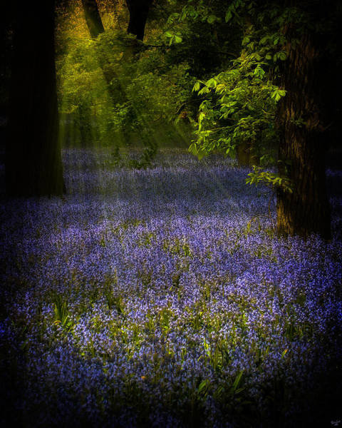 Photograph - The Pixie's Bluebell Patch by Chris Lord
