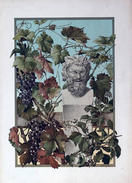 Grape Drawing - The Plant, Grapes, Bacchus, Wine, Mythology, Vine, Symbol by English School
