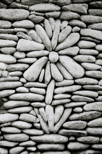 Photograph - The Plant In The Wall by Shaun Higson