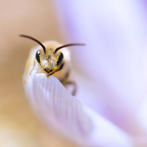 Photograph - The Pollinator by Robin-Lee Vieira