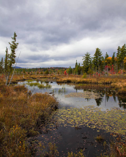 Photograph - The Ponds Near Raquette Lake by David Patterson