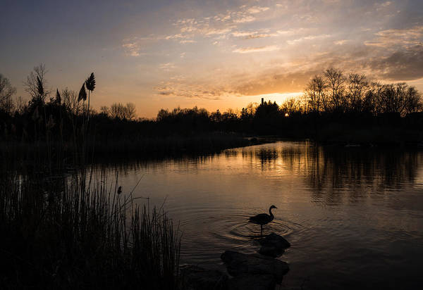 Photograph - The Posing Goose by Georgia Mizuleva