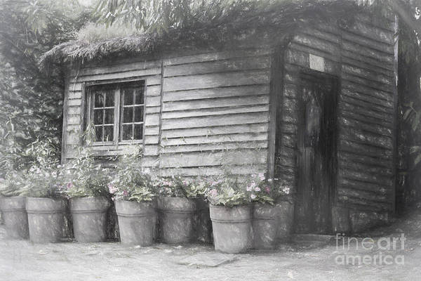 Photograph - The Potting Shed by Elaine Teague