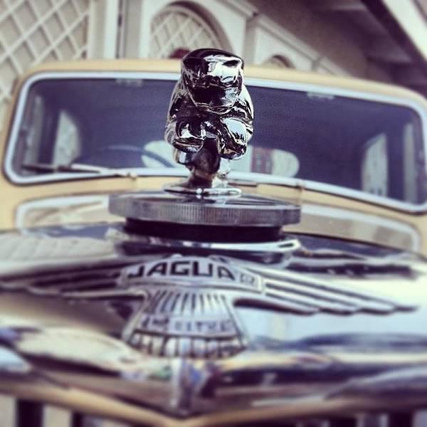 Jaguar Photograph - The Pouncing Cat, Jaguar At Cartier by Rachit Hirani