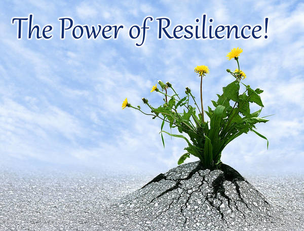 Photograph - The Power Of Resilience by Dreamland Media