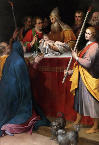 Procaccini Painting - The Presentation In The Temple by Camillo Procaccini