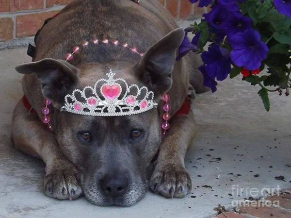 Ivanhoe Photograph - The Princess Pittie With Posies by Ivanhoe Ardiente