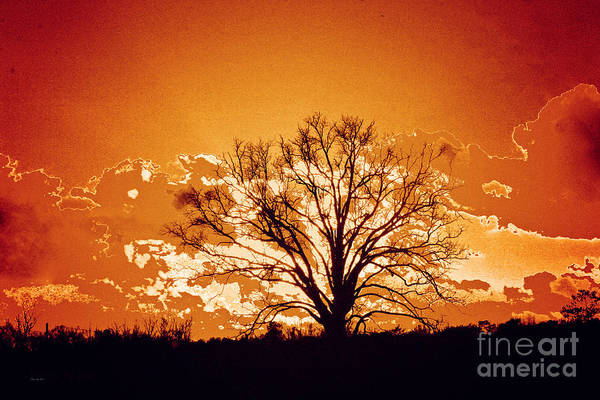 Wall Art - Photograph - The Promise Of A New Day by Jinx Farmer
