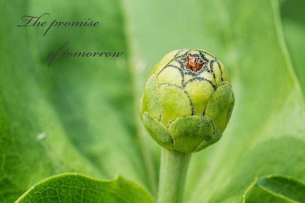 Photograph - The Promise Of Tomorrow by Jeanne May