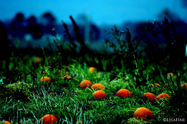 Photograph - The Pumpkin Patch by Lesa Fine