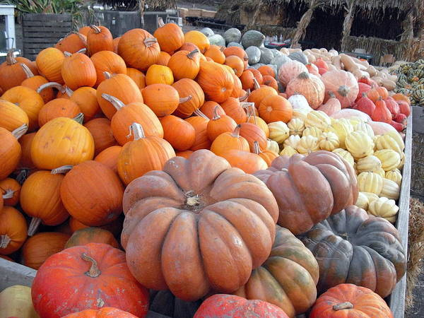 Photograph - The Pumpkin Stand by Richard Reeve