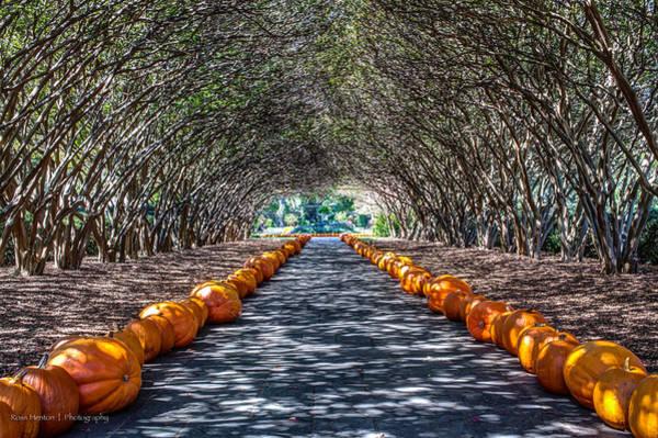 Photograph - The Pumpkin Walk by Ross Henton