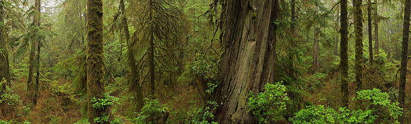 Vancouver Island Photograph - The Rainforest In Pacific Rim National by Robert Postma / Design Pics