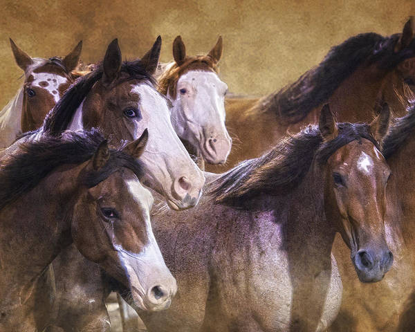 Wall Art - Photograph - The Rank Ones by Ron  McGinnis
