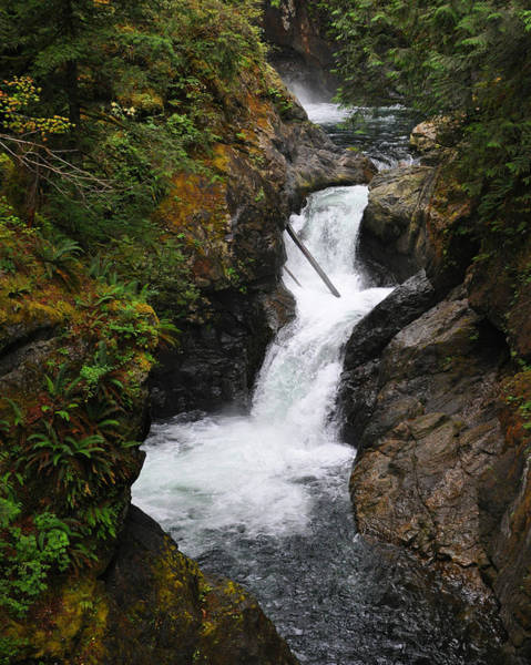 Photograph - The Rapids by Kirt Tisdale
