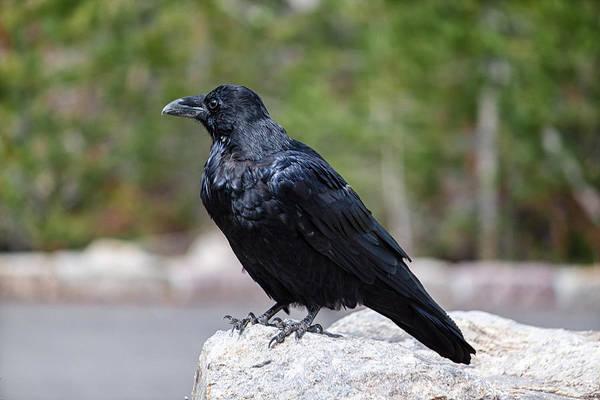 Photograph - The Raven by Lars Lentz