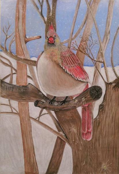 Red Cardinal Drawing - The Real Angry Bird by Denisse Del Mar Guevara