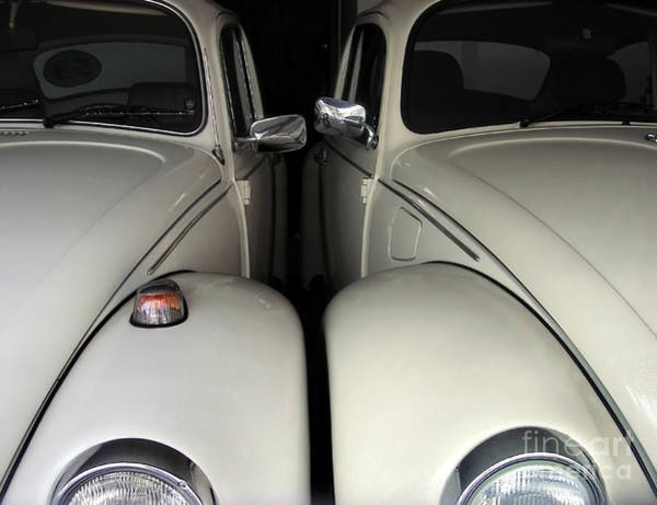 Photograph - The Real Love Bugs by Carlos Alkmin
