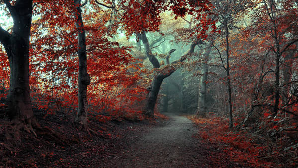 Wall Art - Photograph - The Red Forest by Leif L??ndal