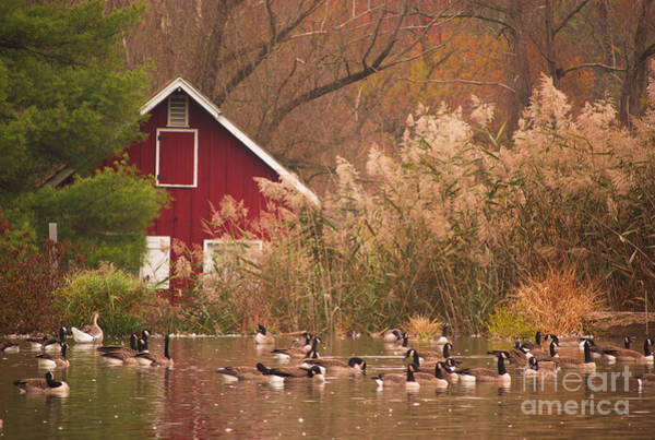 Photograph - The Red Hut By The Pond by Rima Biswas