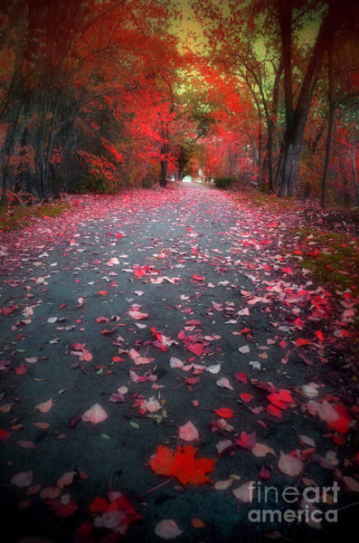 Photograph - The Red Leaf by Tara Turner