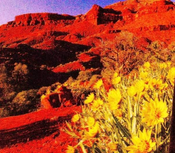Sw Painting - The Red Rocks And The Yellow Flowersl by Anne-Elizabeth Whiteway