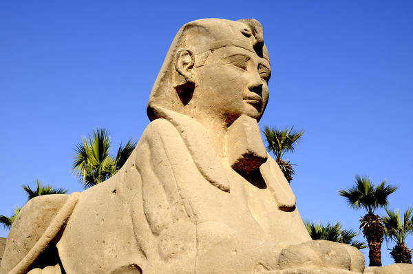 Photograph - The Riddle Of The Sphinx by Brenda Kean