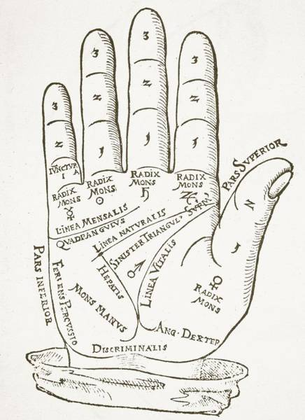 Palm Reading Wall Art - Drawing - Antique Palmistry Diagram  The Right Hand by German School
