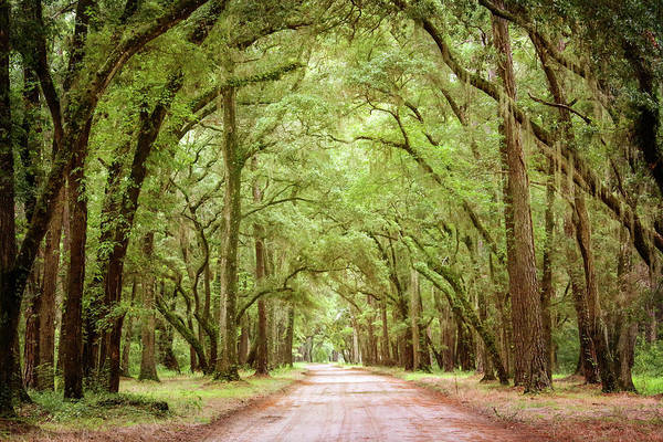 South Carolina Photograph - The Road And The Trees by Daniela Duncan