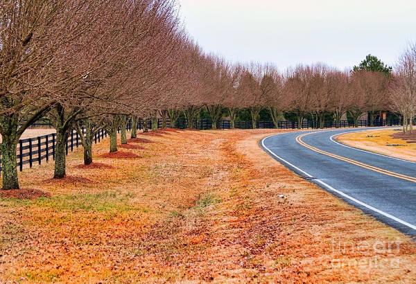 Photograph - The Road Home By Diana Sainz by Diana Raquel Sainz