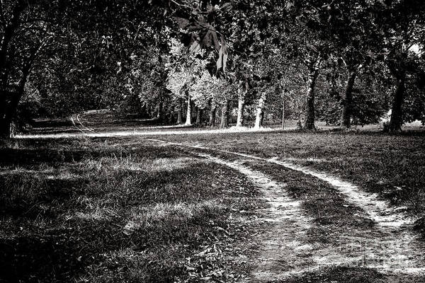 Photograph - The Road Less Than Way Much Less Traveled  by Olivier Le Queinec